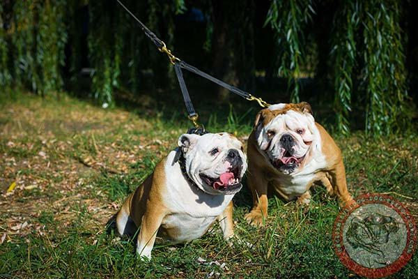 English Bulldog leather leash of genuine materials with brass plated hardware for improved control