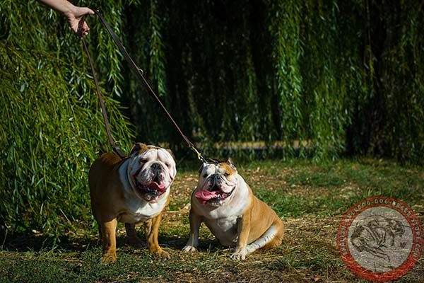 English Bulldog leather leash with corrosion resistant brass plated hardware for daily activity