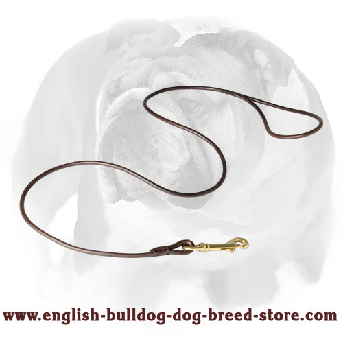 English Bulldog leather dog leash with reliable brass hardware