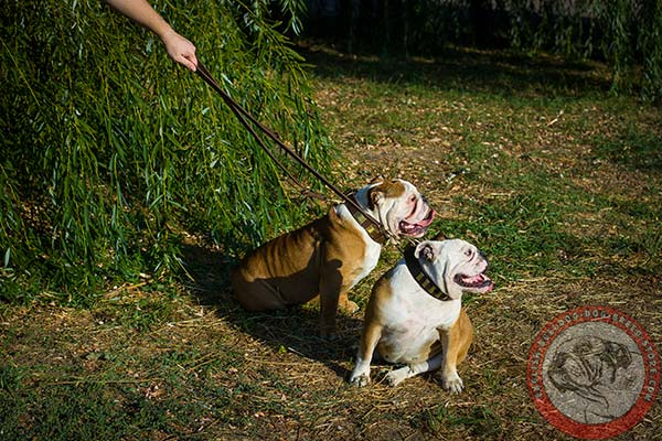 English Bulldog leather leash with corrosion resistant brass plated hardware for any activity
