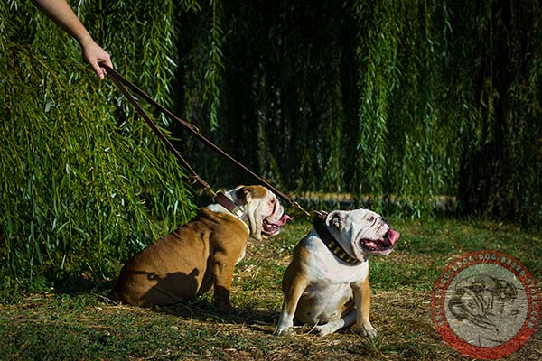 English Bulldog leather leash of lightweight material with brass plated hardware for safe walking