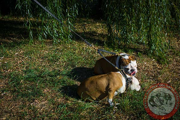 English Bulldog leather leash with reliable hardware for daily activity