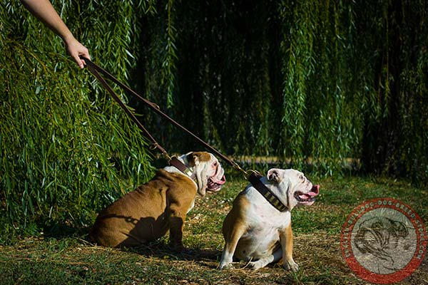 English Bulldog leather leash with rust-proof brass plated hardware for quality control