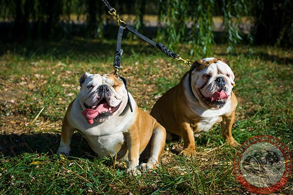 English Bulldog leather leash of high quality with brass plated hardware for improved control