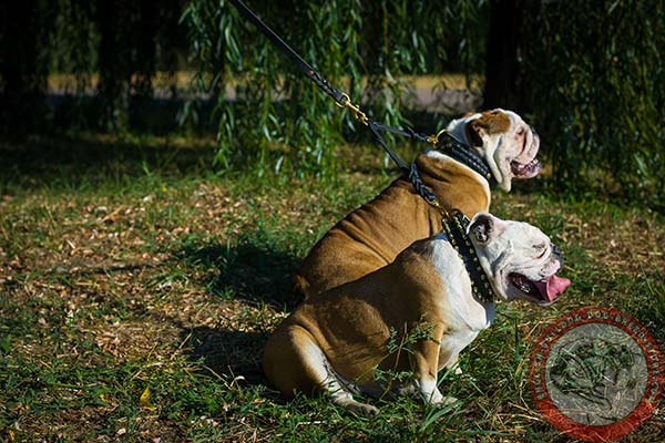 English Bulldog leather leash with durable hardware for daily walks