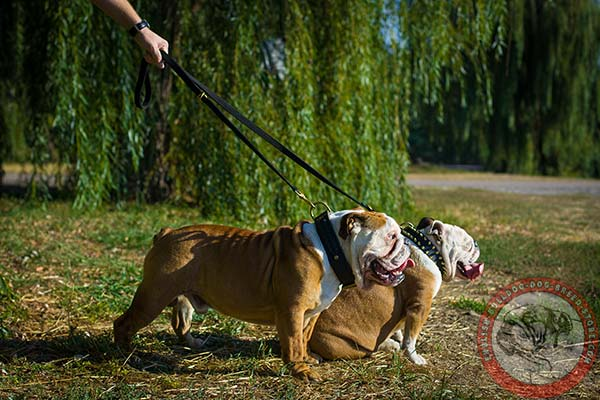 English Bulldog nylon leash with rustless brass plated hardware for daily walks