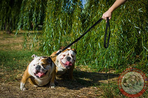 English Bulldog nylon leash with rust-proof hardware for perfect control