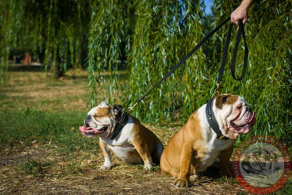 English Bulldog nylon leash of classic design with brass plated hardware for basic training