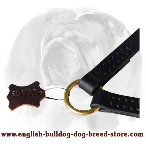 English Bulldog leather coupler for two dogs with braid