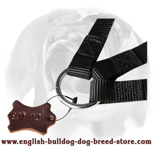 English Bulldog strong nylon dog coupler for three dogs