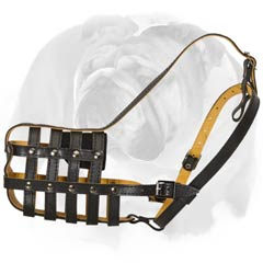 Muzzle for English Bulldog