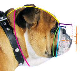 How to measure your English Bulldog